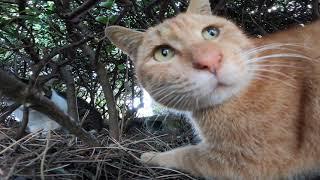 猫が言い争いしている猫の家庭内にカメラが潜入