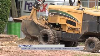 Guyancourt : début de l'abattage des saules dans le quartier du Parc