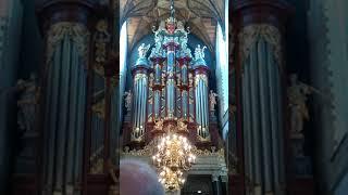 Orgelconcert ,Bavo Haarlem
