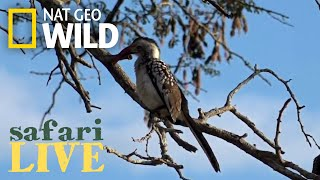 Safari Live - Day 153 | Nat Geo Wild