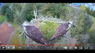 Preview of stream Seaside Osprey Cam