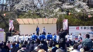 秋田市 千秋公園桜祭りで行われた ヤートセin千秋公園 での演舞です.