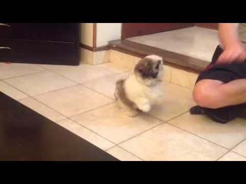 how to play with puppy without encouraging biting