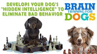 How to make a dog stop barking  |  Adrienne in Action | Unlocking Your Dog's Natural Intelligence