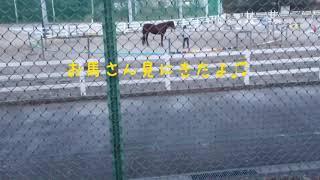 この前近づけなかったお馬さんを見に行きました   今日は近くで見れまし...