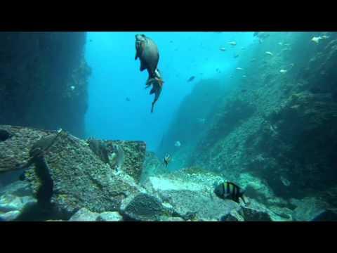 Diving Fish Rock Cave South West Rocks NSW -  40m Vis