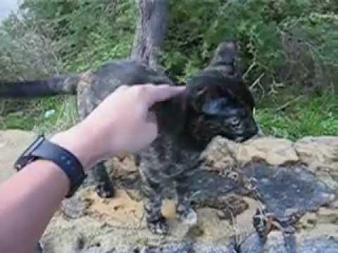 When A Cat Swings Its Tail