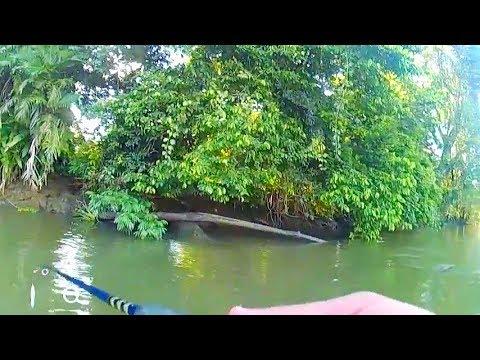 Donde Menos Se Espera Te Sorprenden.  Rio Coto-Zona Sur-Costa Rica, Captura De Pargo
