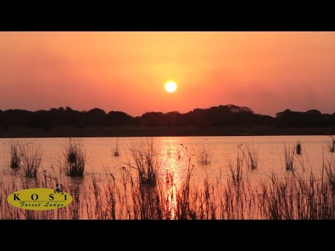 iSibindi Africa Lodges - Kosi Forest Lodge Accommodation Kosi Bay South Africa
