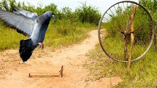 Awesome Quick Bird Trap Using Old Bike Wheel - How To Make Bird Trap With Bike Wheel That Work 100%
