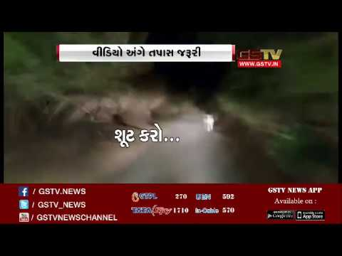 SHOCKING VIDEO : Tourists car chases  lioness in Amreli