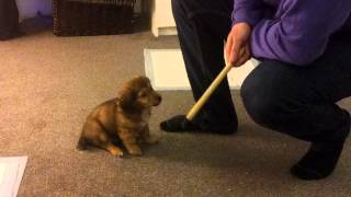 Popular Videos - Puppies