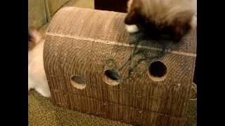 Cats Scratching Furniture - The Original Catpods Product Review ラグドール Floppycats