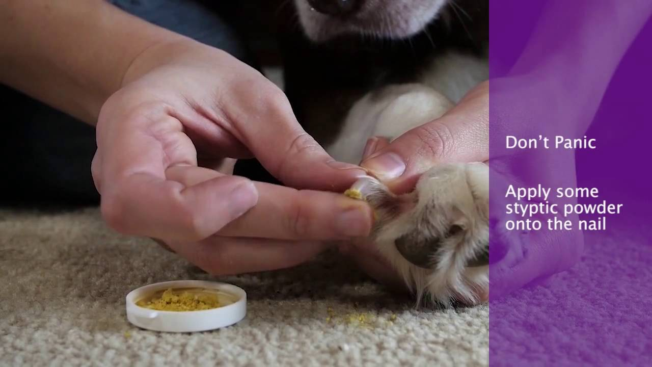 What To Do If Dog\'s Nails Are Bleeding - YouTube