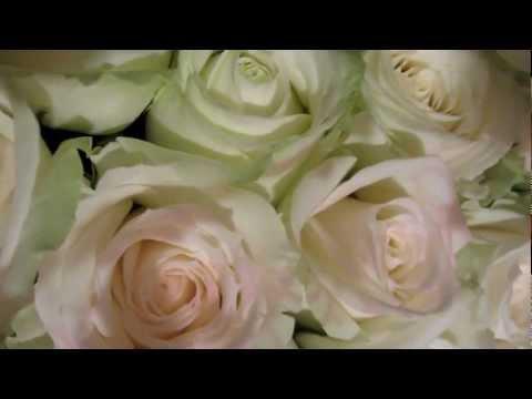 Аваланж сорт розы от Аскании.MOV