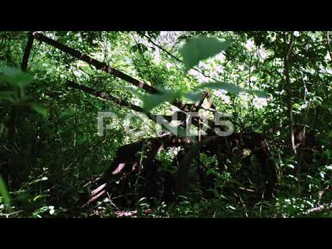 Antique Farm Equipment Abandoned In Forest Wide Shot Stock Footage