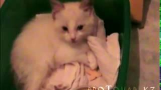 Самая лучшая порода кошек, Лайфхак по выбору питомца в квартиру, часть 1