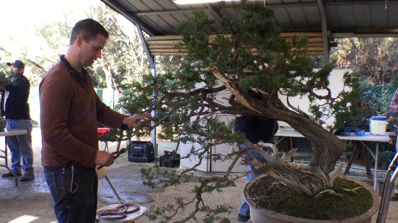 Bonsai With Ryan Neil Youtube