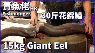 30斤野生花錦鱔花錦皇 西環魚王【OH! Seafood 4K】