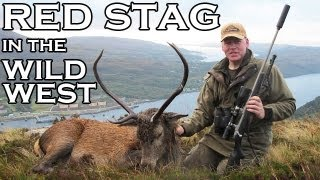 Red Stag in the Wild West of Scotland
