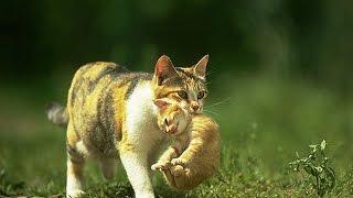 Смотреть лучшие приколы+про кошек. Ржачные домашние монстры!