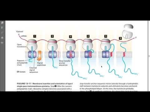Moving Protiens in Membranes and Vesicles
