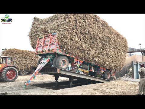Belarus 510.1 | Hydraulic Unloading System of Sugarcane loaded Trailer