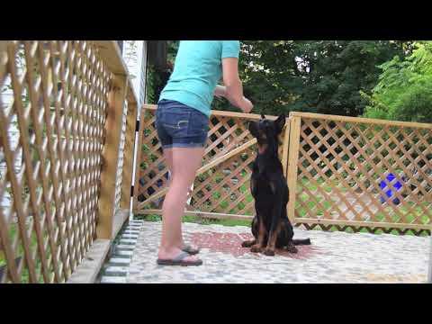 Mango Trick Dog Champion