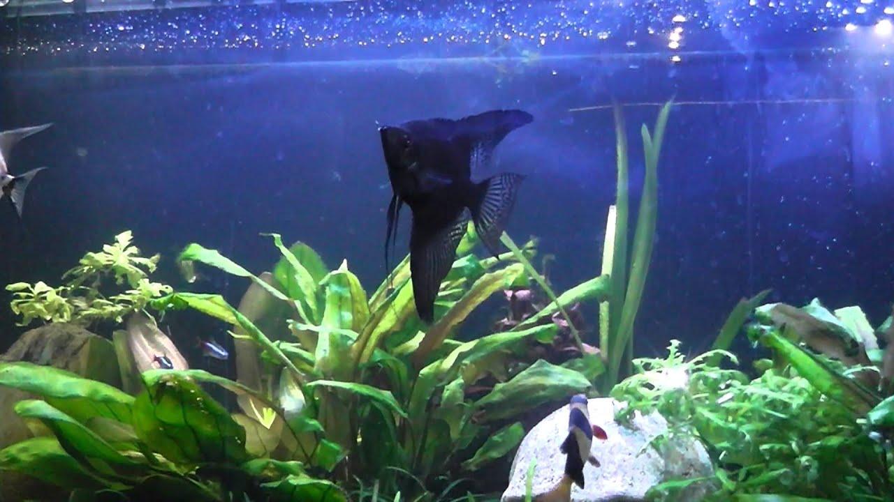 Guía básica de acuarios (mi primer acuario) parte IV Maxresdefault