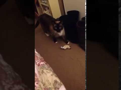 Smart cat pt1