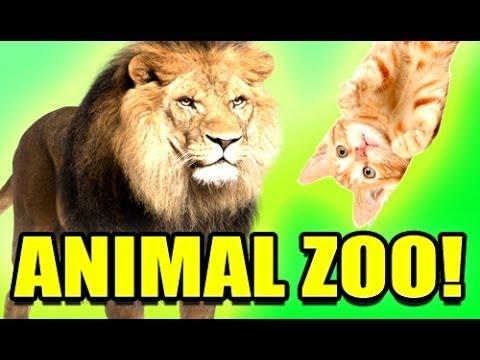 Gmod Acachalla ANIMAL ZOO Mod! (Garry's Mod)