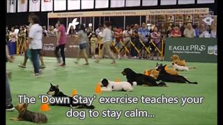 Basic dog training course - dog training video Singapore