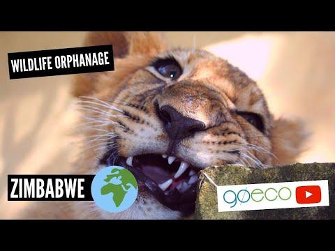 Volunteer at an African Wildlife Orphanage in Zimbabwe | GoEco