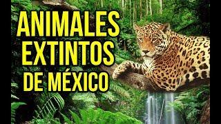 ►10 Animales Mexicanos Extintos - (Endémicos) | Saimsboy