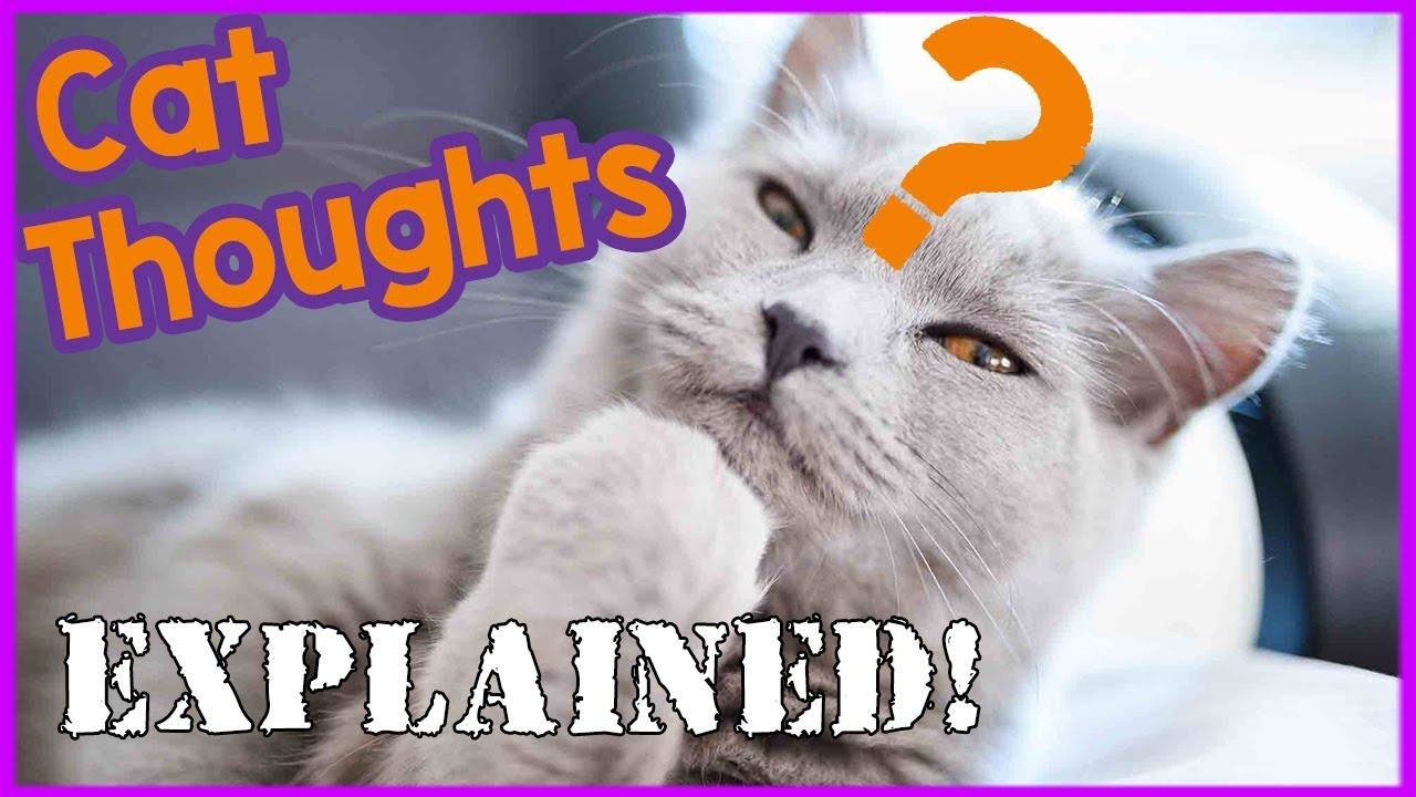 What Is My Cat Thinking Tips And Tricks On How You Can Understand