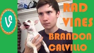 Best Brandon Calvillo Vines! Ultimate Brandon Calvillo compilation! Hilarious Vines with titles!