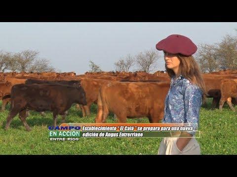 Maria Garat - Establecimiento El Calá - Planteo Productivo y Manejo del Rodeo