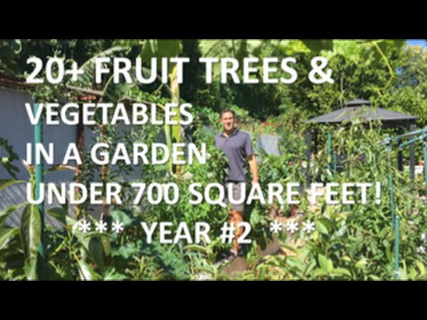 20+ FRUIT TREES & VEGETABLES IN A GARDEN UNDER 700 SQUARE FEET! |  YEAR #2