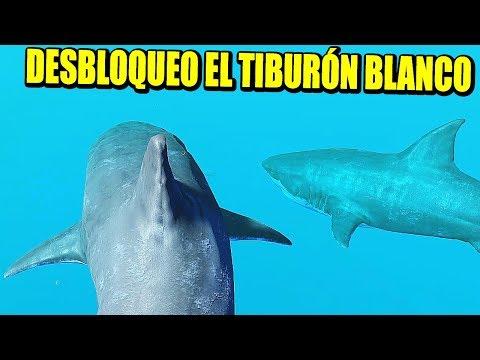 FEED & GROW: FISH - EL AMO DEL OCÉANO, TIBURÓN BLANCO DESBLOQUEADO | Gameplay Español - VICIO OMT