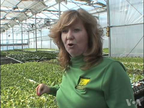 Hydroponic Farmer Produces Year-Round Harvest