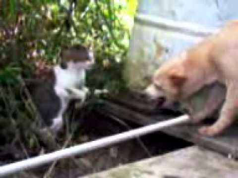 Video anjing menggonggong kucing