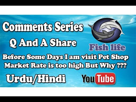 Before Some Days I am visit Pet Shop Market Rate is too high But Why ??? Urdu/Hindi