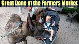 Great Dane Enjoys the Farmers Market