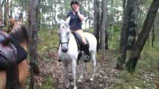 Criollo and his andalusian girl friend in the australian bush
