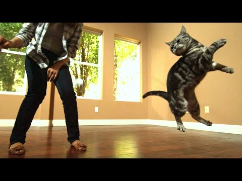 download Awesome Cats In Slow Motion (1,500fps)