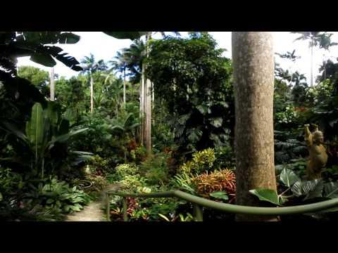 Barbados 360 - A VR Tour of Huntes Gardens