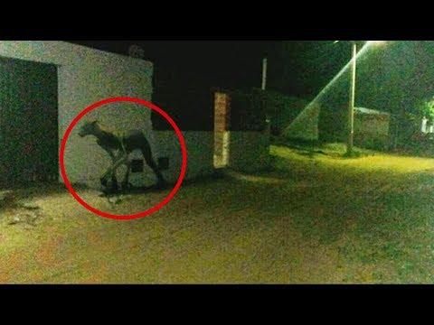 La Verdad tras la Imagen VIRAL de la Extraña Criatura en Argentina
