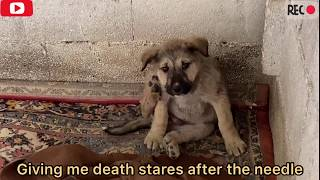 2 abandoned puppies cry from pain and fear!! watch there survival story!