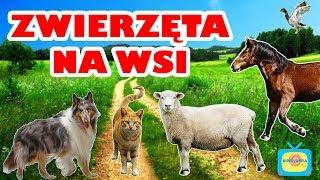Zwierzęta na wsi - Nauka zwierząt dla dzieci po polsku - Odgłosy zwierząt - Farma