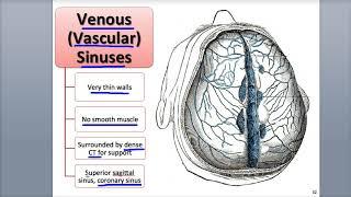 9-4 Venules and Veins